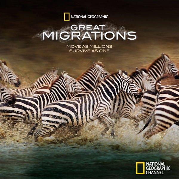 Големите миграции: Надпревара за оцеляване / Great Migrations: Race to Survive (Част 3)